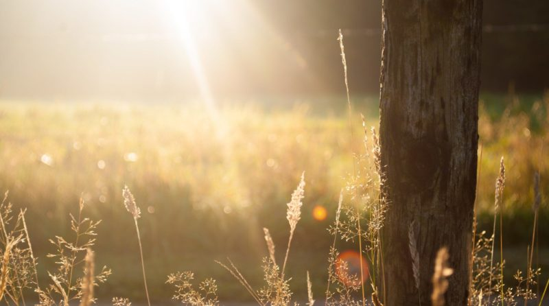 Photo by Zwaddi on Unsplash - Eduquer Avec Sagesse rayon soleil herbe tronc d arbre